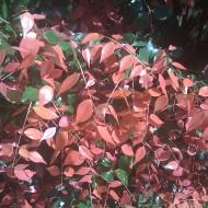 We're going on a leaf hunt ….
