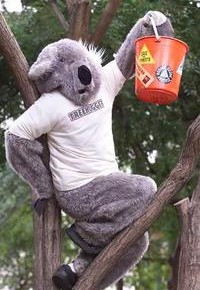 koalatreehugger_narrowweb__200x317,1