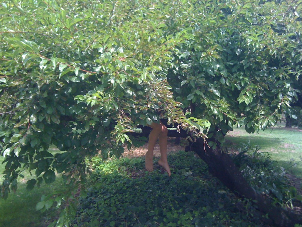 Child hiding in a tree, tree climbing