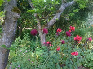 """""""Thistles come in red?"""" Grace Webster"""