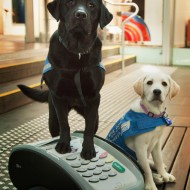 What seeing eye dogs and EFTPOS have in common…