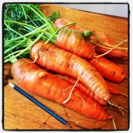 Carrots ~ fostering creativity and a cool competition