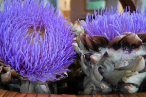 Flowering artichokes from the farm