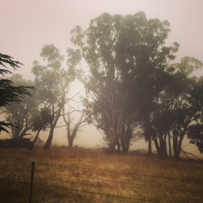 Scotch mist comes to the Southern Tablelands