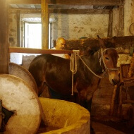 Dubrovnik. GoT, bivalves and mules…