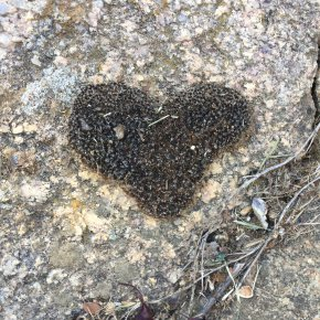 The perfect love heart from nature.